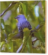Blue Bird With A Yellow Throat Wood Print