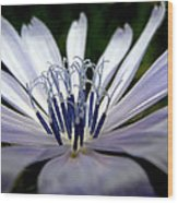 Blue Blossoms  3 Wood Print