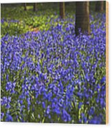 Blue Blue Bells Wood Print