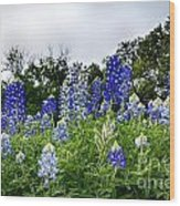 Blue Bonnet Carpet V9 Wood Print