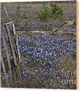 Blue Bonnet Fence V2 Wood Print