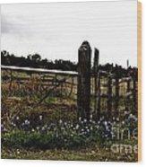Blue Bonnet Fence V4 Wood Print
