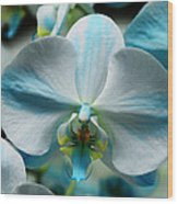 Blue Bow Orchid Wood Print