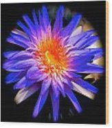 Blue Burst Lily Wood Print