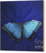 Blue Butterfly Ascending 02 Wood Print