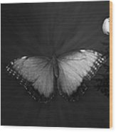 Blue Butterfly Ascending Bw Wood Print