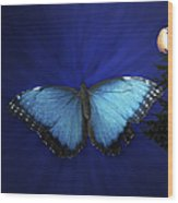 Blue Butterfly Ascending Wood Print