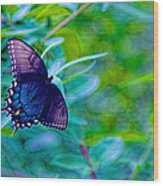 Blue Butterfly Fantasy Wood Print