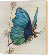 Blue Butterfly II Wood Print by Warwick Goble