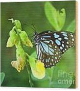 Blue Butterfly In The Green Garden Wood Print
