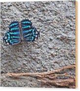 Blue Butterfly Myscelia Ethusa Art Prints Wood Print