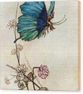 Blue Butterfly Wood Print by Warwick Goble