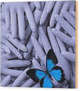 Blue Butterfly With Gary Hands Wood Print by Garry Gay