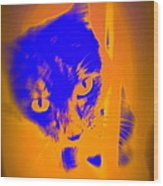 The Blue Cat Is Watching You From Behind The Barres  Wood Print