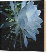 Blue Cereus Wood Print