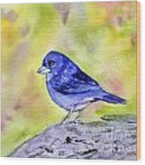 Blue Chaffinch Wood Print