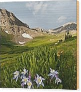 Handie's Peak And Blue Columbine On A Summer Morning Wood Print