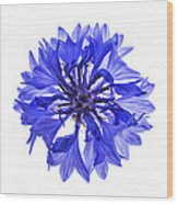 Blue Cornflower Flower Wood Print