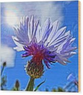Blue Cornflower With Blue Sky Wood Print