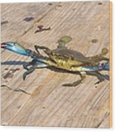 Blue Crab On Dock Assateague Island Md Wood Print