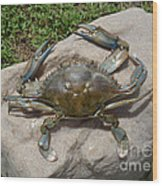 Blue Crab On The Rock Wood Print