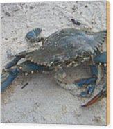 Blue Crab Wood Print by Paula Rountree Bischoff