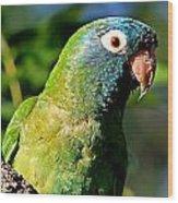 Blue-crowned Parakeet Wood Print by Ira Runyan