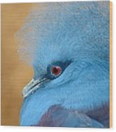 Blue Crowned Pigeon Wood Print