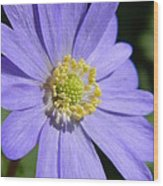 Blue Daisy Up Close Wood Print