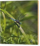 Blue Damsel Dragon Fly Wood Print