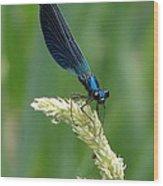 Blue Damselfly Wood Print by Ramona Johnston