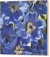 Blue Delphinium 9655 Wood Print