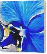 Blue Diamond Orchid Close Up Wood Print