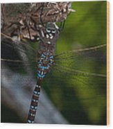 Blue Dragon 14 Wood Print