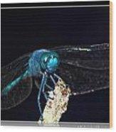Blue Dragon Wood Print