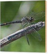 Blue Dragonfly 2 Wood Print