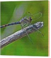 Blue Dragonfly 5 Wood Print