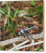 Blue Dragonfly Beauty Wood Print by Ella Char