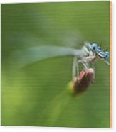 Blue Dragonfly Sitting On A Dry Red Plant Wood Print
