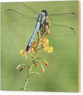 Blue Dragonfly On Yellow Flower Wood Print