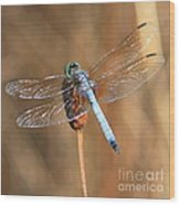 Blue Dragonfly Square Wood Print