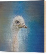 Blue Eyed Beauty - White Ostrich - Wildlife Wood Print