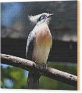 Blue Eyed Bird Wood Print