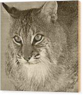 Blue Eyed Bobcat-sepia Wood Print