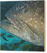 Blue-eyed Grouper Fish Wood Print