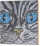 Blue Eyed Stripped Cat Wood Print