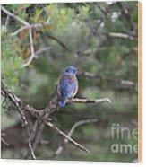 Blue Feathers Wood Print