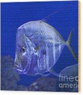 Blue Fish   #4990 Wood Print