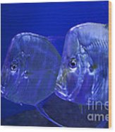 Blue Fish   #4991 Wood Print