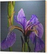 Blue Flag Iris Flower Wood Print